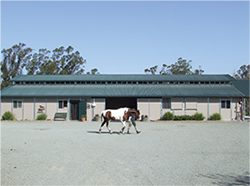 Artaurus Veterinary Clinic